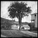 Plymouth elm tree